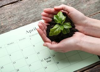 Agricultural calendar 2020 - when to sow and what to fertilize popular plants with?