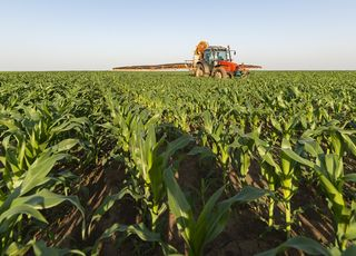 Corn Nutrition - What should maize conditioner contain?