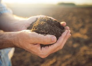Soil pH - what should every farmer know about soil pH?